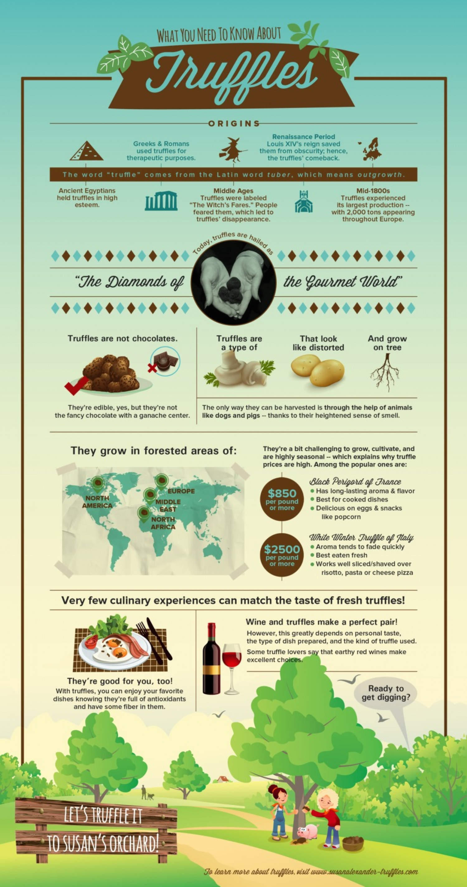 What You Need To Know About Truffles Infographic