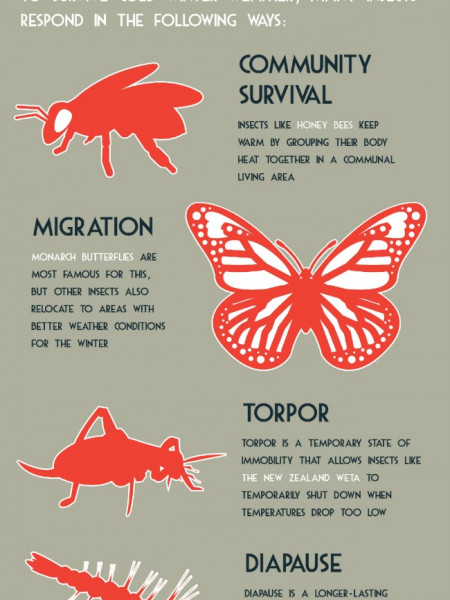 Where do Insects Go in Winter? Infographic