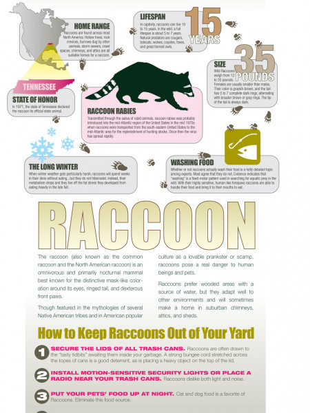 Where the Wild Things Are: Protecting Your Family and Pets from Raccoon Rabies Infographic