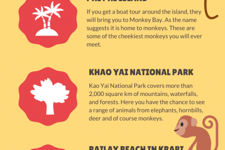 Where To See Monkeys in Thailand? Infographic