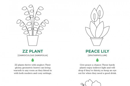 Which indoor plant is right for your home? Infographic