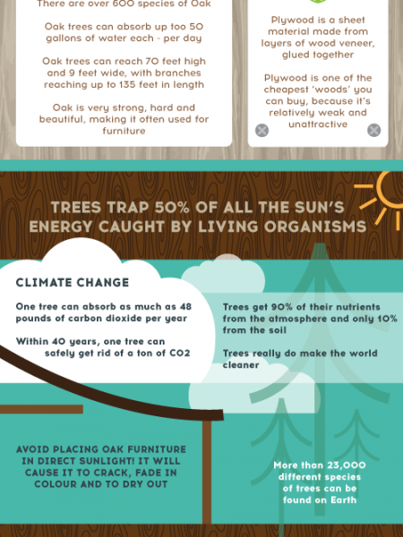 Which Wood To Choose? Infographic