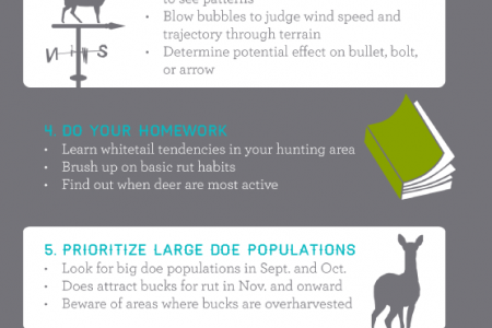 Whitetail Deer Hunting Tips Infographic