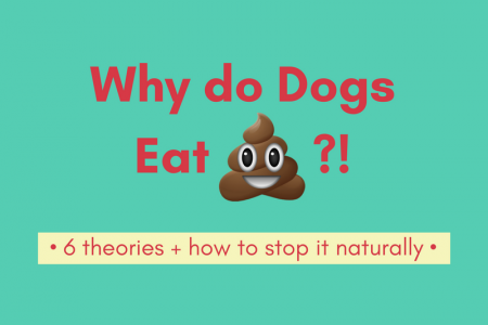 Why do Dogs Eat Poop? Infographic
