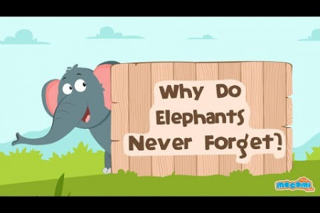 Why Do Elephants Never Forget? Infographic