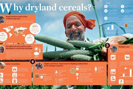 Why dryland cereals? Infographic
