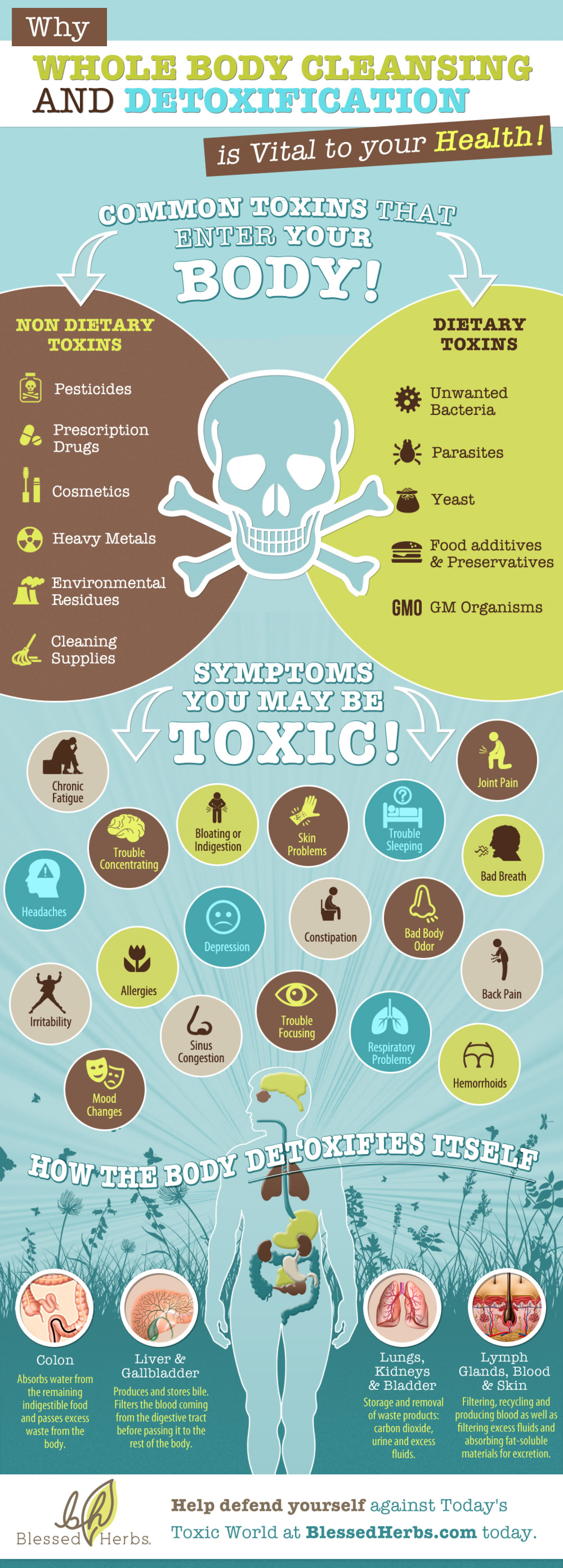 Why Whole Body Cleansing and Detoxification is Vital to Your Health! Infographic