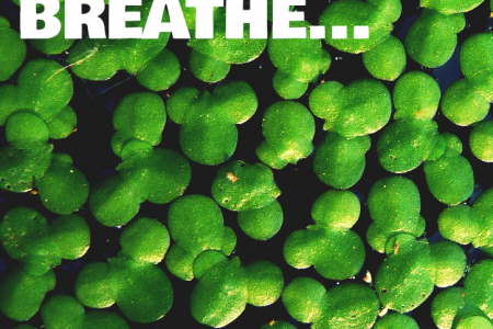Why Your Pond Needs To Breathe Infographic