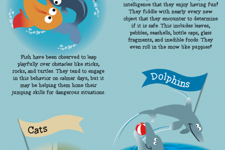 Wild and Whimsical: Play in the Animal Kingdom  Infographic