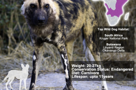 Wilddog SnapFacts Infographic