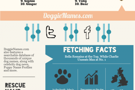 World's Most Popular Dog Names Infographic