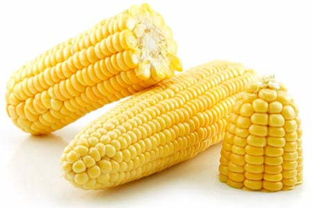 Yellow Maize Benefits Infographic