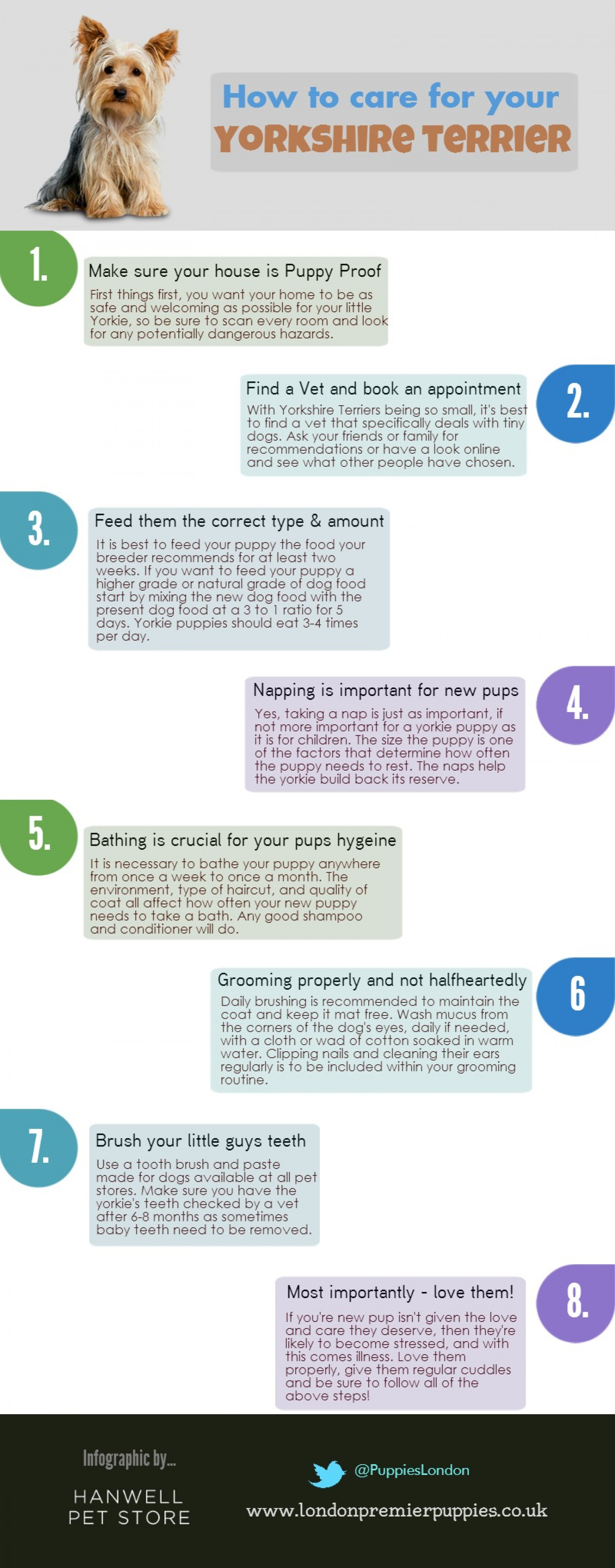 Yorkshire Terrier Care Guide Infographic