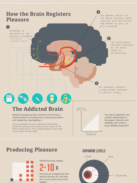 drug affect the brain stem Drug addiction, also referred to as drug dependence, is a disorder of the brain brought on by the use of psychoactive drugs these drugs affect some of the normal processes in the brain related to perception, emotion, and.