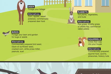 Your Guide Keeping Critters Out of Your Yard & Gardens With Alternative Food Options Infographic