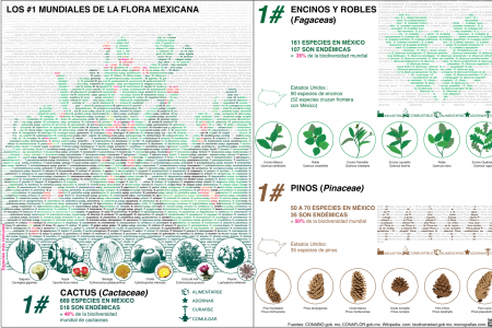 #1 Mexican plants Infographic