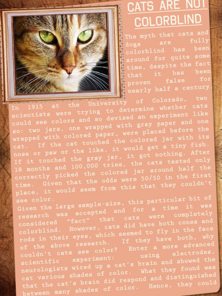 10 Amazing Cat Facts Infographic