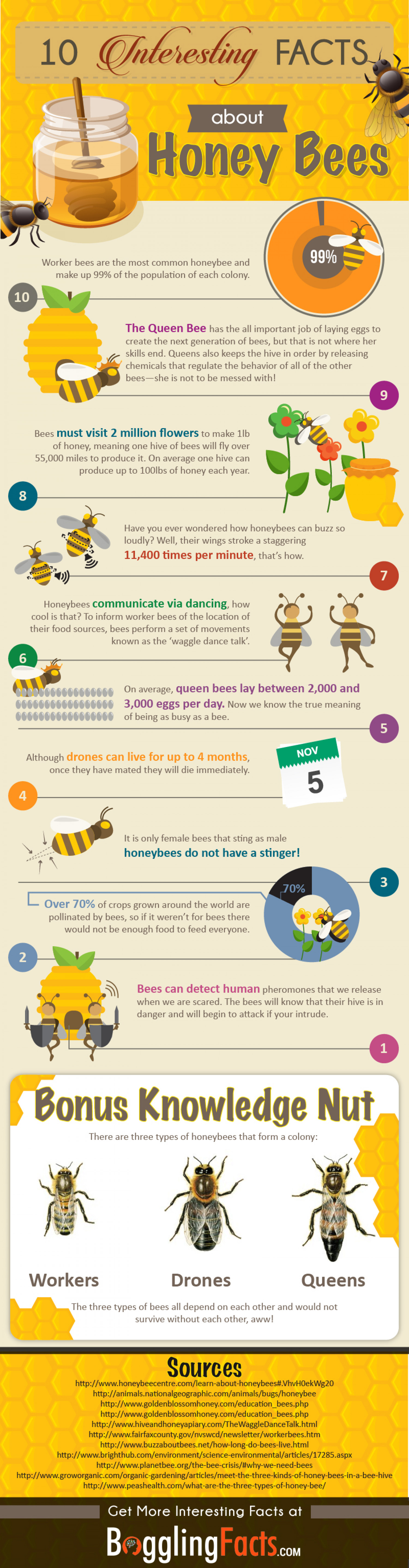 10 Fascinating Honey Bee Facts You Didn't Know  Infographic