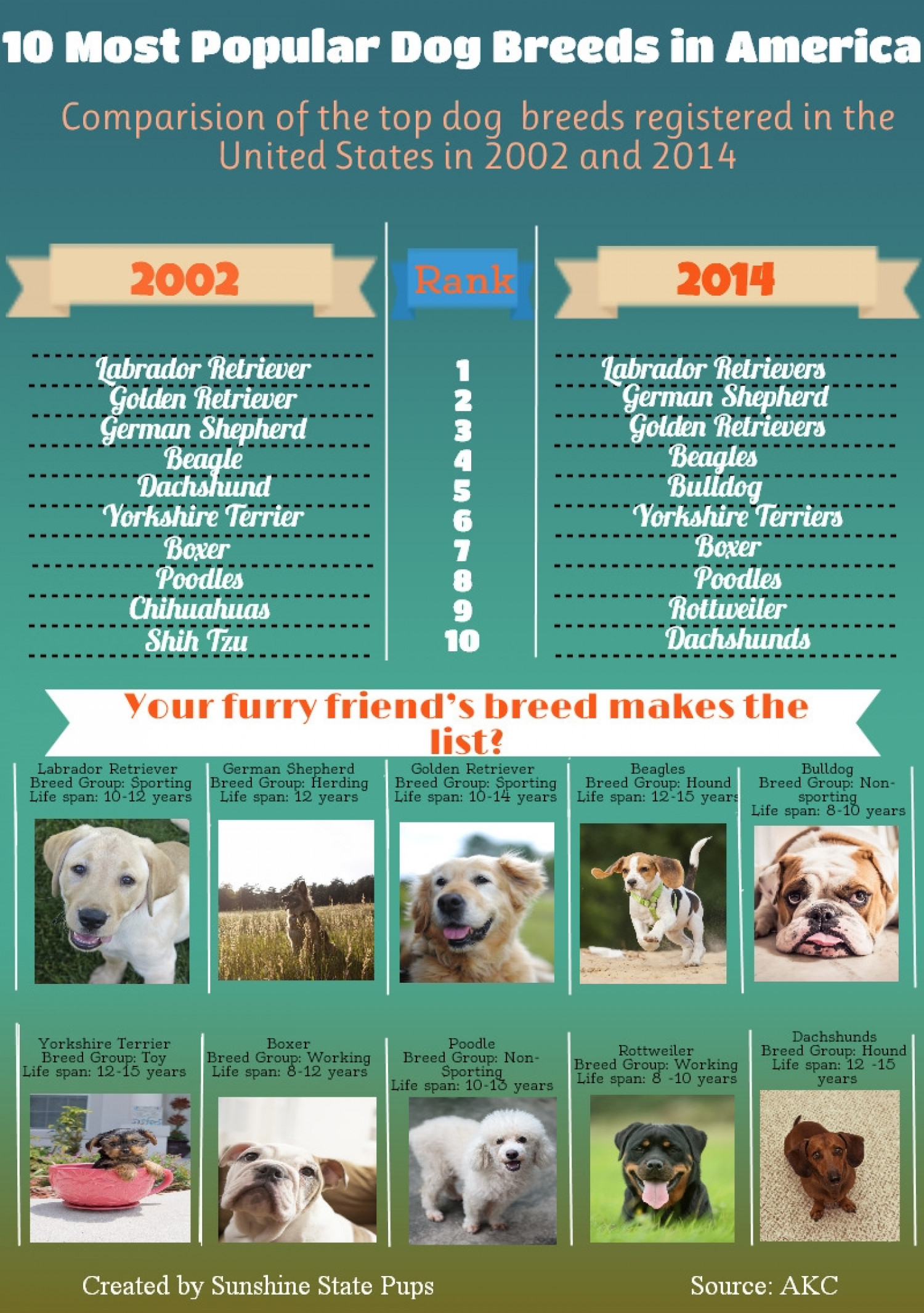 10 Most Popular Dog - Puppies Breeds in America Infographic