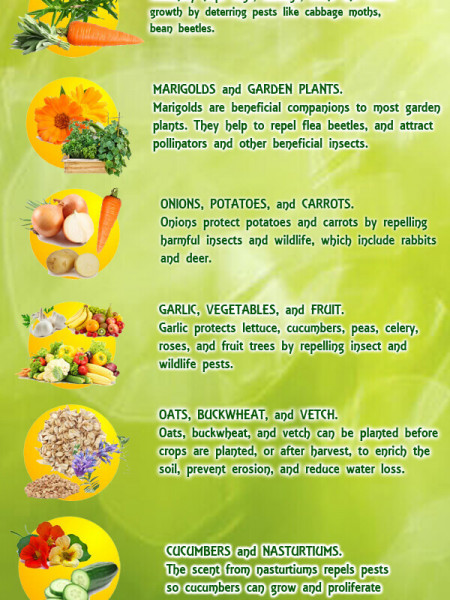 10 Proven Planting Methods That Will Increase Crop Yield Infographic