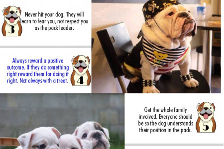10 Steps To Train Your Bulldogs Infographic