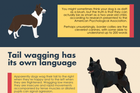 10 Things You Didn't Know About Dogs Infographic