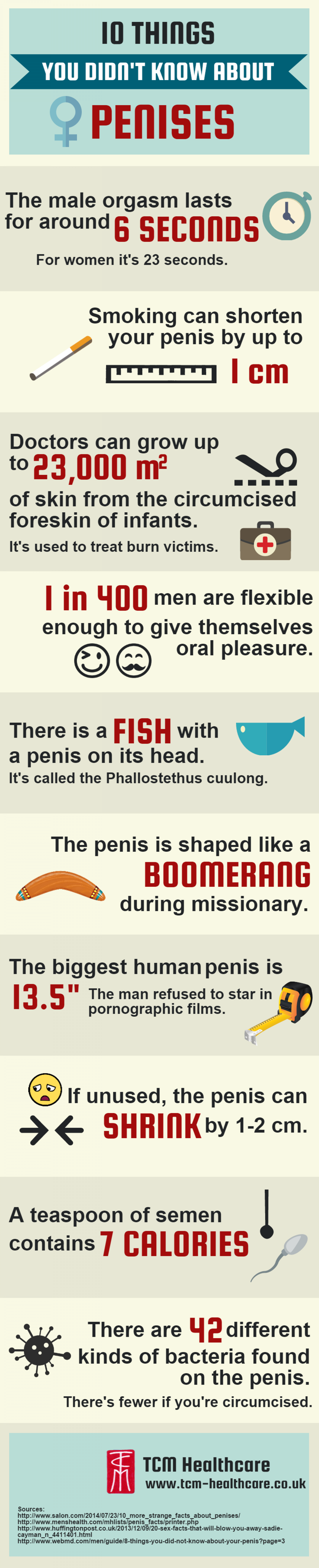 10 Things You Didn't Know About Penises Infographic