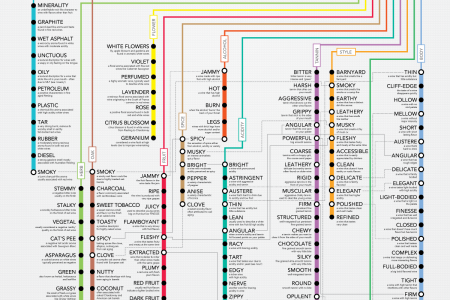 120+ Wine Descriptors Explained Infographic