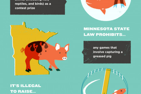 13 Crazy Pet Laws (That Are Actually Real!)  Infographic