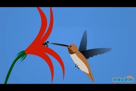 14 Interesting Facts about Hummingbirds  Infographic