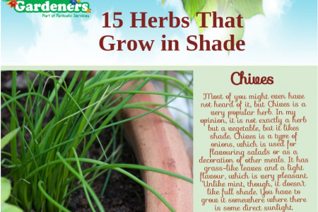 15 Herbs That Grow in Shade Infographic