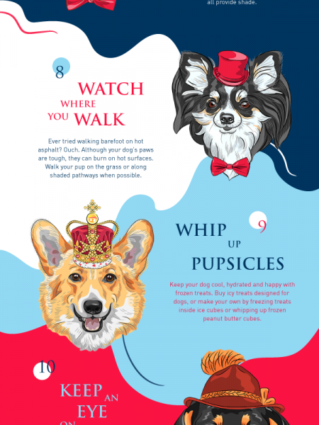 16 Ways to Help Your Dog Beat the Heat Infographic
