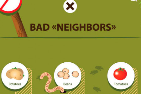 18 Most Important Rules of Compatibility of Plants and Vegetables in The Garden [Infographic] Infographic