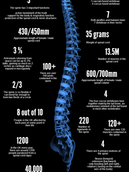 20 Amazing Facts about the Spine Infographic