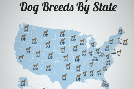 2016 Most Popular Dog Breeds by State Infographic