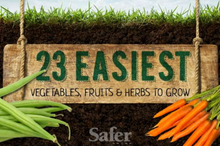 23 Easiest Vegetables, Fruits and Herbs to Grow Infographic