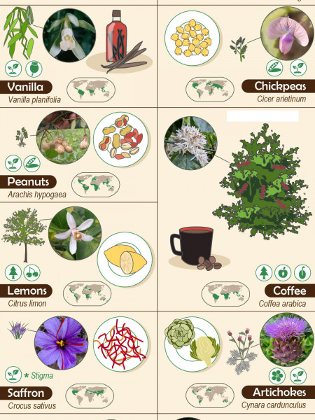 27 Foods and the Plants They Come From Infographic