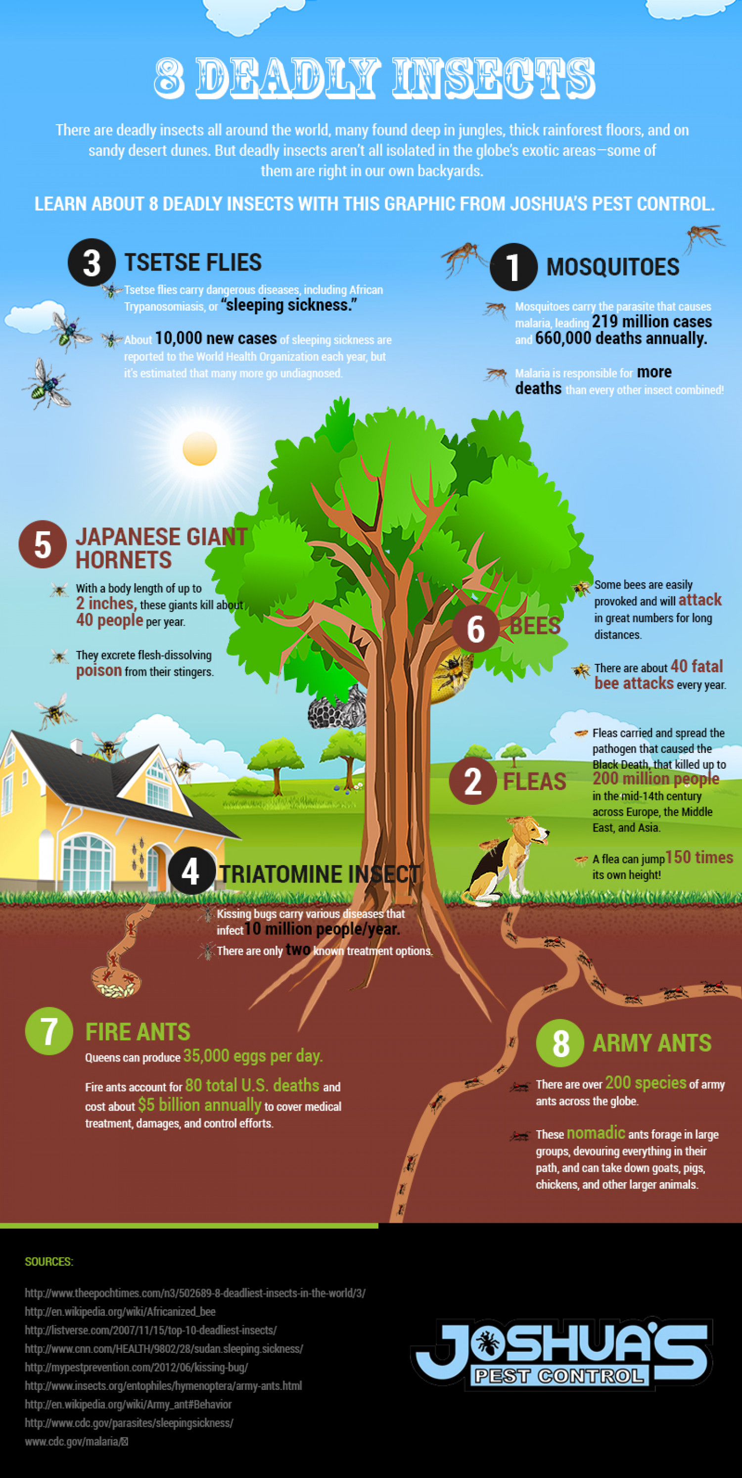 3 Deadly Insects Infographic
