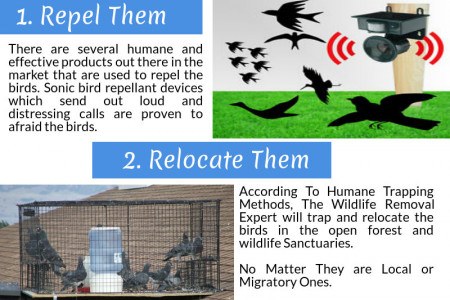 3 Steps to Get Rid of Unwanted Birds Infographic