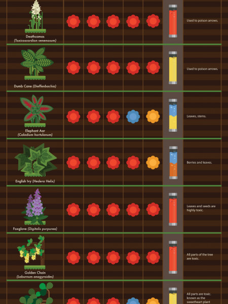30 Garden Plants That Are Harmful For Your Pets Infographic