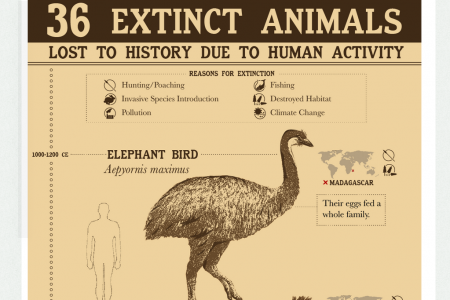 36 Extinct Animals Lost to History Due to Human Activity Infographic