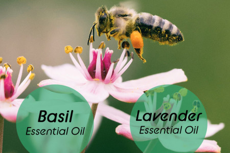 4 Essential Oils for Bee Stings Infographic