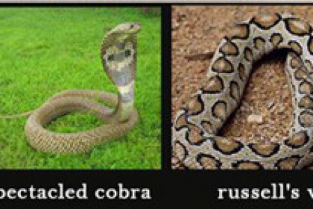 4 Most Poisonous Snakes In South India And Tips To Recognize Them Infographic