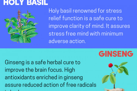 5 Best Herbs to Reduce Brain Fog naturally Infographic