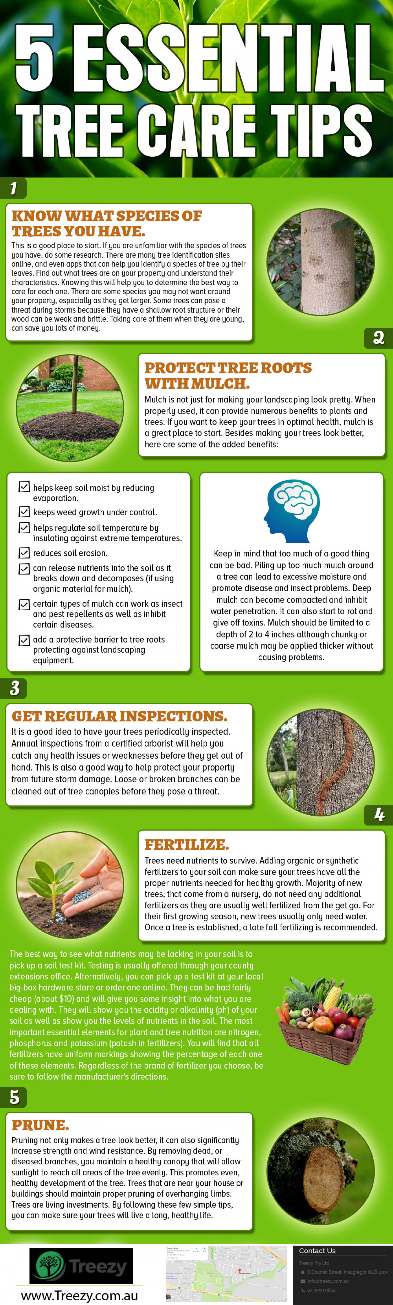 5 Essential Tree care Tips Infographic