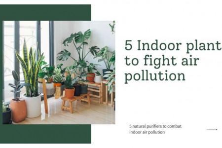 5 Indoor plants to fight air pollution Infographic