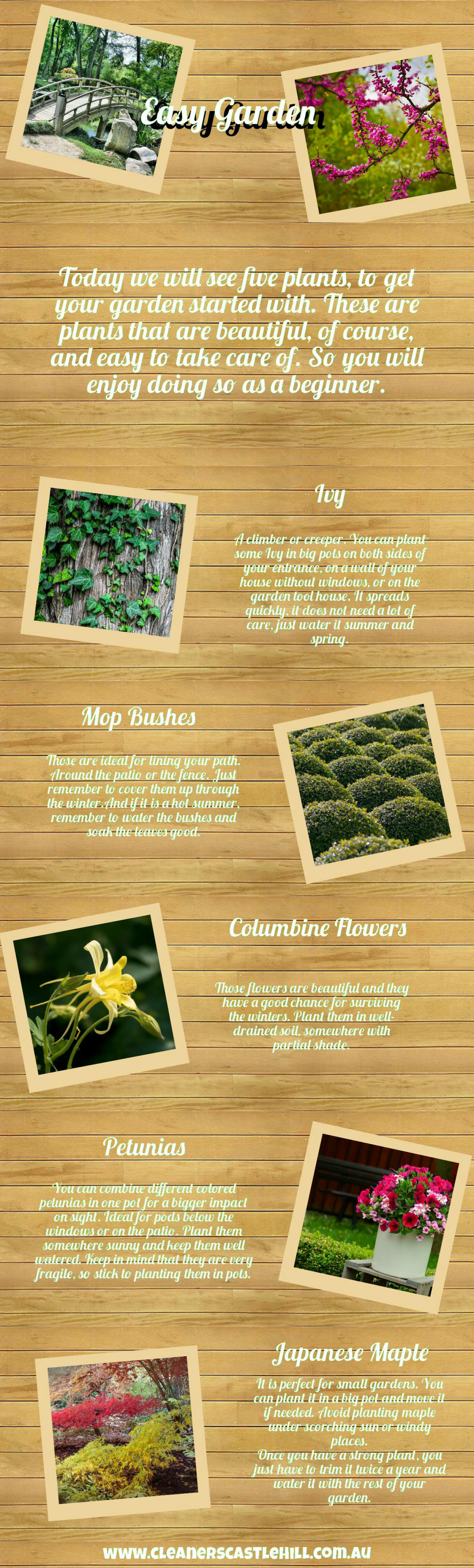 5 Plants for Beginners Infographic