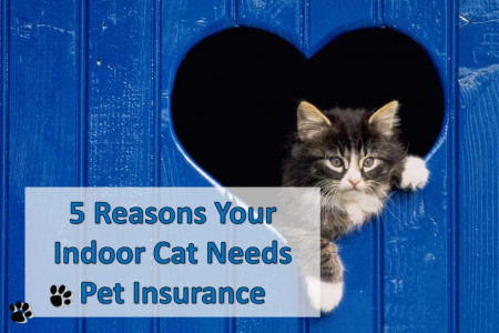 5 Reasons Your Indoor Cat Needs Pet Insurance Infographic