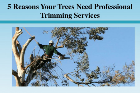 5 Reasons Your Trees Need Professional Trimming Services Infographic