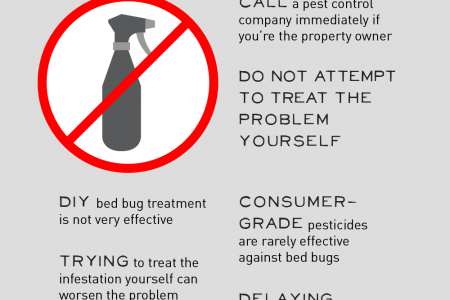 5 Steps to Take at the First Sign of Bed Bugs Infographic